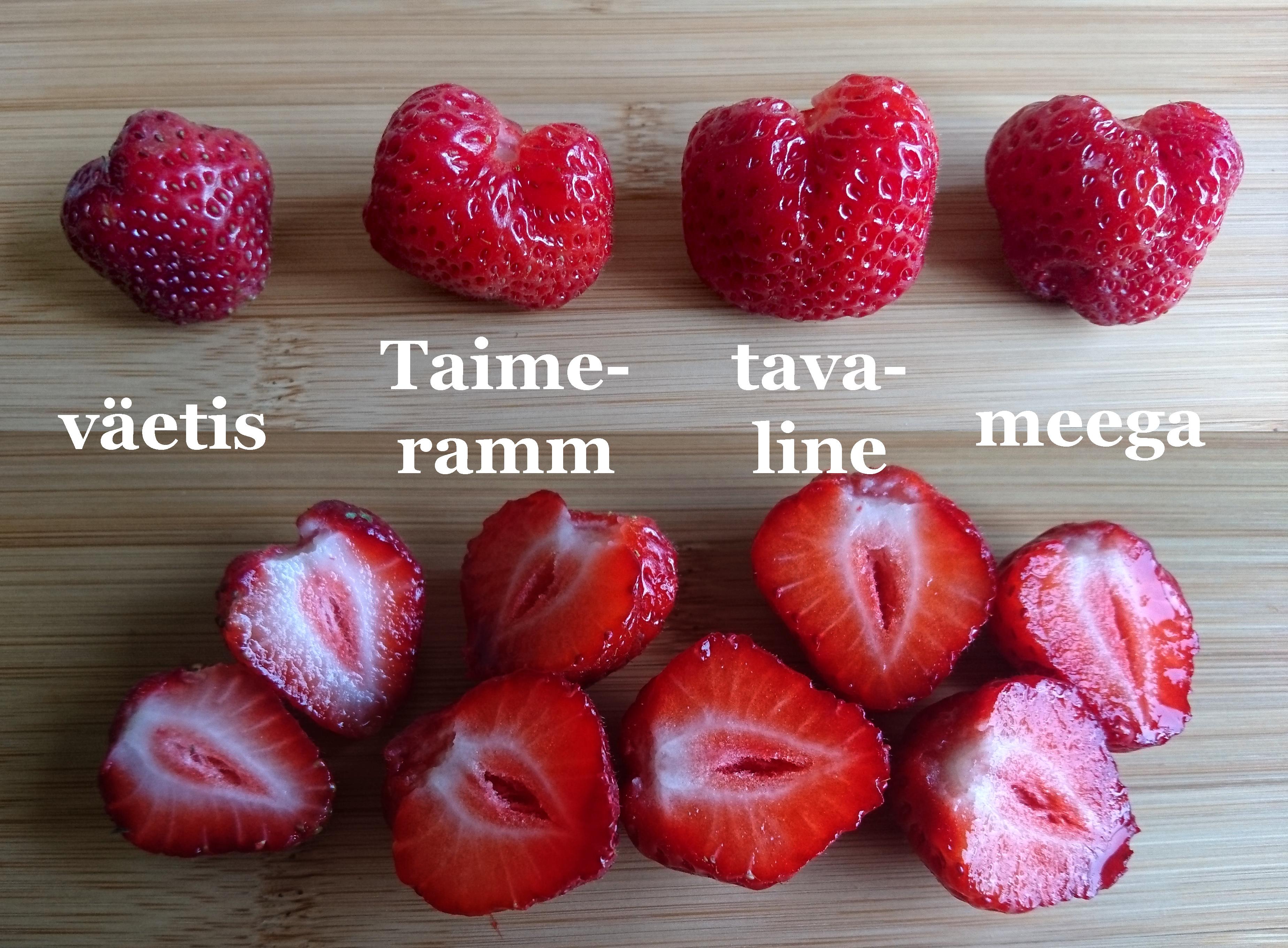 Maasikate_kasvatamise_katse_2